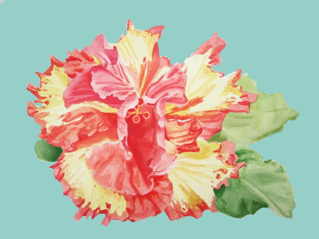 High Definition Double Hibiscus