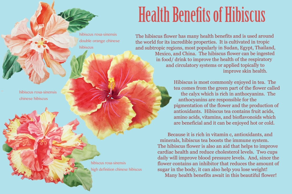 Signage that I have created that could go in a conservatory.  Focus was the hibiscus flower and its abundance of health benefits